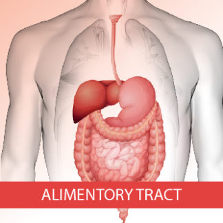 Alimentary tract